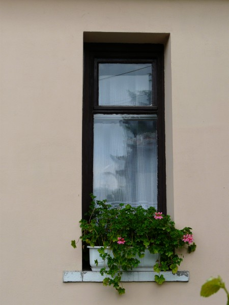 New window with flowers on the sill