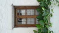 Window with vine above it