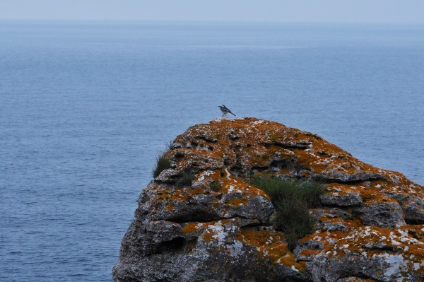 Small bird on a cliff by the sea