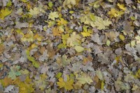 Autumn leaves fallen on the ground