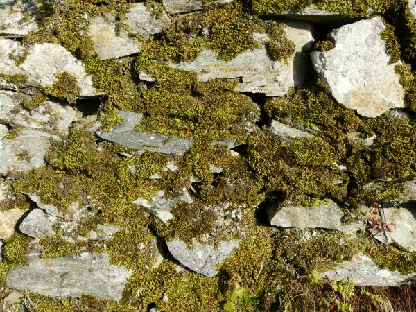 Moss growing on stones