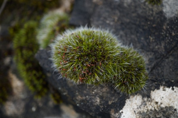 Small tuft of moss