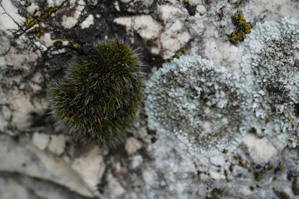 Small tuft of moss variation 3