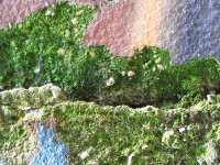 Colorful paint, crack and green moss variation3